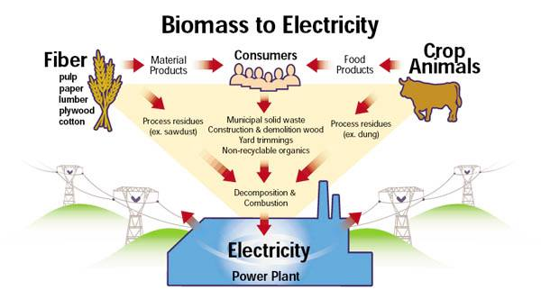 Five important things to know about the popular biomass projects
